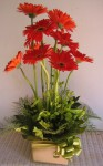 red gerbera box