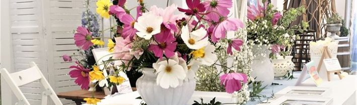 Mother nature stole the show in our display of very pretty Cosmos blooms for…